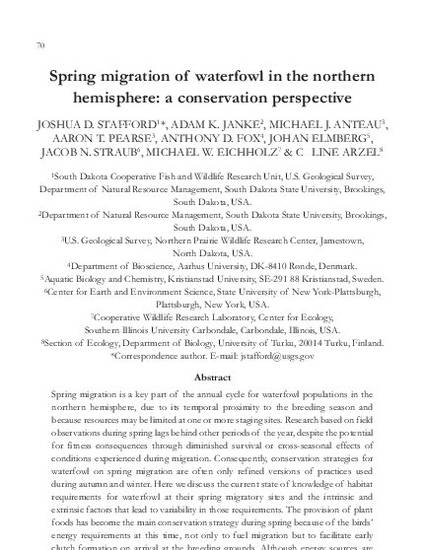 Spring Migration Of Waterfowl In The Northern Hemisphere A - Usa northern hemisphere