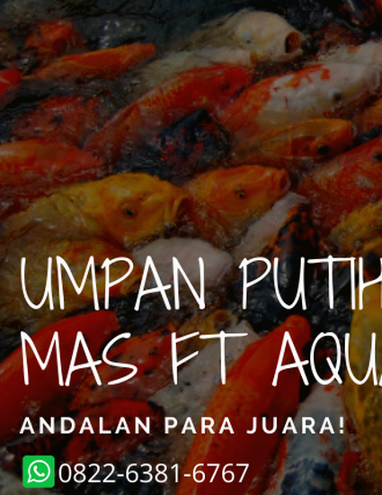 Cara Meracik Umpan Putih Ikan Mas Jitu Dengan Aquatic Essen By Essenjitu Tasik