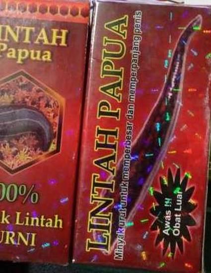 jual lintah papua asli di surabaya cod 082245567779 by ahong shop
